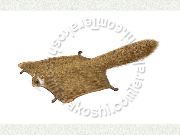 ムササビの画像 p1_28
