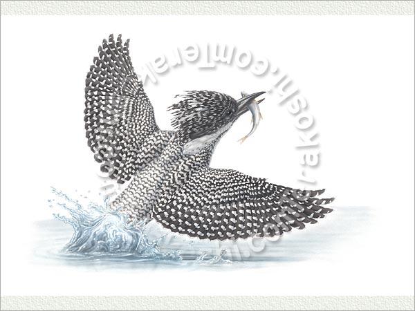 http://www.terakoshi.com/item/bird/bird-tenji/88-05250b.jpg