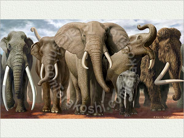 Members of the Elephan...