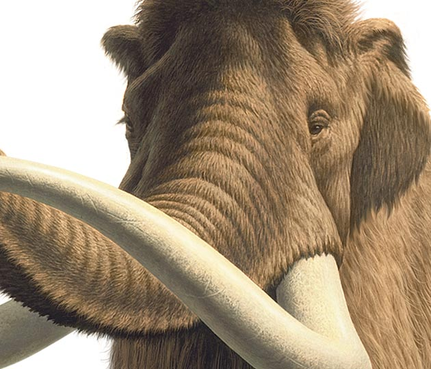 "A part of illustrated Mammoth selected for the composition of commemorative stamp of ""EXPO 2005 AICHI, JAPAN"""